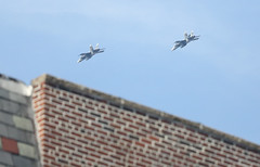Fighter Jets over Bay Ridge Brooklyn October 6, 2012 (extrabox) Tags: newyork brooklyn training military jets formation bayridge militaryjets fighterjet fighterjets militaryjet trainingexercise