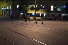 Brno streets at night. A dog. (dennisfen) Tags: street city travel dog silhouette night dark women czech availablelight brno 2012 canonef50mmf14 canoneos5dmarkii