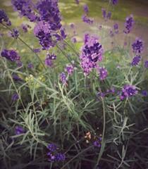 #flower #flowers #plants #park #walk #bristol #flor #flores #plantas #paseo #picoftheday #fotodeldia (lunatica_89) Tags: flor park bristol picoftheday flores flower walk fotodeldia plantas plants flowers paseo