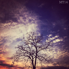 Bare (10/11/2014) (Matthew Trevithick Photography) Tags: london ontario canada ca 2014 matthewtrevithick tree sunset william birds bare leafless fall autumn cold vibrant