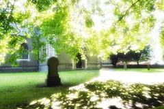 Roath St Margarets (garethedwards36) Tags: roath st margarets church chapel churchyard graveyard tree leaves sun cardiff wales uk lumix