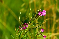 Focus (Michael Eickelmann) Tags: fokus plants pflanzen flowers blumen nature natur panasonic lumix dmc fz 200