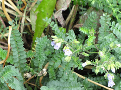 CopperRiver08 (alicia.garbelman) Tags: alaska copperriver wildflowers
