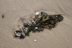 Strandmix (MaretH.) Tags: strand beach sand muscheln algen clams algas meer sea nordsee northsea