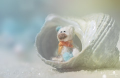 peanut at the beach (rockinmonique) Tags: peanut miniature shell beach macro blue white pretty teddy teddybear toy whimsical fun child moniquew canon tamron copyright2016moniquewphotography