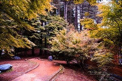 () Tags: canon 1dx ef24105mmf4lis  maple