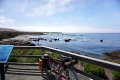 Elephant Seals and Sea Lions (Franklyn W) Tags: biketour bikecamping bikeride touring touringbike california pacificcoasthighway hwy1 cahwy1 bigsur kirkcreek sansimeon cambria cayucos morobay morobaystatepark pacificocean twitter tumblr
