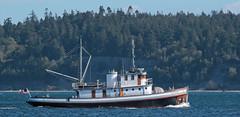"IMG_2208 CE2 - Port Townsend WA - Port Hudson Marina - 2016 40th Annual Wooden Boat Festival - tug CHIPPEWA (BlackShoe1) Tags: washington wa washingtonstate olympicpeninsula porttownsendwa boat boatfestival woodenboat classicwoodenboat woodboat ""northwest maritime center"" ""wooden foundation"" wbf nwmc ""port hudson"" wash pacificnorthwest pugetsound jeffersoncounty eastjeffersoncounty quimperpeninsula porttownsend victorianseaport tug tugboat"