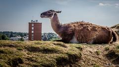 Vue sur la ville !!! (musette thierry) Tags: musette thierry d600 zoo maubeuge france animaux animalier