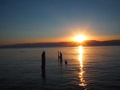 Sunset sur le lac (remoulou) Tags: sunlight light landscape paysage em10 omd olympus thonon chablais 74 hautesavoie savoie rayon sun soleil france explored explore leman lac lake sunset