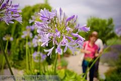 PLW_5556 (Laszlo Perger) Tags: wien vienna sterreich austria blumengarten hirschstetten flowergarden
