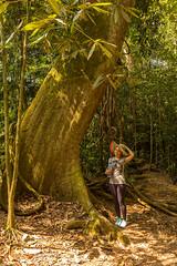 Sumatra 16-40 (JD_Rocks) Tags: sumatra laketoba medan indonesia volcaniclake rainforest orangutan bukitlawang batak gunungleusernationalpark