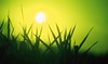 Farm, sun through reed canary grass, gre by Rosewoman, on Flickr