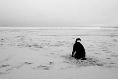 (martinpickard) Tags: sea dog beach seaside sand cornwall hole head digging schnauzer mini dig