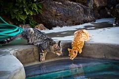 IMG_0193-7 (Rob_el_dur) Tags: flickr mare gatto gatti dammuso lagodivenere dammusi pantellera