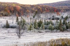 Frost In The Valley (rickhanger) Tags: autumn fall nature frost westvirginia valley canaanvalley