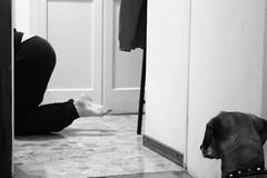 osservazioni canine (Maieutica) Tags: door bw dog feet strange look cane floor legs bn porta bizarre piedi bizzarro strano gambe pavimento guardare bassotto
