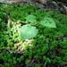 誕生をイメージした新芽の写真(虫食い有)の写真