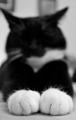 (elluva) Tags: bw white black cute cat canon paw adorable paws kissa sp 1100d