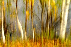 magic trees at the lake (enki22) Tags: lake fall nature icm intentionalcameramovement enki22