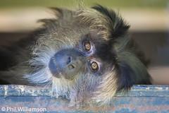 Intense eyes (pwilliamson222) Tags: orange toronto canon zoo intense eyes 70200