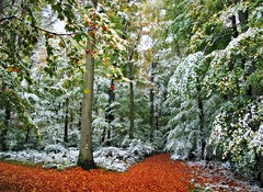 ItsANewLife-ComeIn! (BphotoR) Tags: autumn snow leaves forest germany woods october hessen path herbst powershot mystical wald mixture herbstwald naturesfinest bergstrasse sdhessen supershot g10 abigfave juhhe anawesomeshot forestofodes bphotor blinkagain