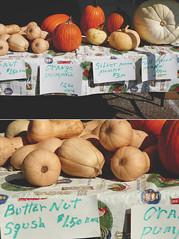 pumpkins & squash (NatalieShockleePhotography) Tags: street food west vegetables yummy yum farmers market sale tasty vegetable columbia mo homemade missouri ash farmer organic veggies grocery homegrown