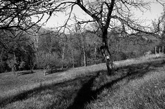 sotto il melo (TIMPICE) Tags: bw panorama tree apple landscape nikon albero autunno mattia alpi prato montagna paesaggio mela melo d90 alpeggio zanet