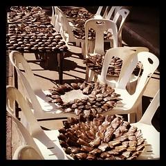ปลาสลิดบางบ่อ สู่เมนูปลาสลิดทอดแสนอร่อยของพี่ชุลีพร ยุ่นสมาน ถวายพระธุดงค์เช้านี้#ดาวรวย#tudongway
