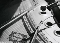 PurephonicSession-008 (Peter Bongard) Tags: leica musician white black mamiya 35mm studio frank 50mm media fuji simone björn pop iso 1600 summicron peter mai vision ii seven soul funk precision groove plugin plus gail medium format neopan session mp f2 benjamin 50 hartmann ilford gospel kamilla recording augsburg gino rz67 502 panf 352 imacon summicronm flextight negpos riccitelli bongard flexcolor colorperfect höfliger purephonic