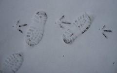 Shall We Dance? (Margaret Edge the bee girl) Tags: winter snow tracks footprints