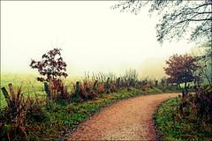 Silence (Mah Nava) Tags: mist nature fog nebel path natur silence weg stille
