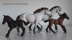 camargue horses (WorldsInMiniature) Tags: horses horse france miniatures miniature mare replica pony ponies provence stallion camargue foal replicas schleich