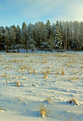 Cold landscape (Tim Lindstedt) Tags: wood morning trees winter white snow cold tree art nature beautiful beauty field grass weather digital forest canon season landscape frozen photo woods scenery flickr frost seasons image sweden dusk snowy january scenic picture sunny frosty pic best foliage photograph scenary freeze frame sverige dslr 2013 550d timlindstedt