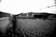 No Lmits (Salva G.) Tags: bw white black blanco digital lens reflex nikon dof y bokeh negro d70s sigma bn single dslr blanc negre 56 1850 f35
