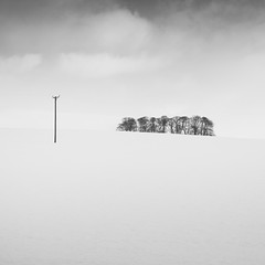 Pole & Trees (Jeff Vyse) Tags: trees blackandwhite snow minimal pole northumberland relationship telegraphpole