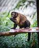 Singapore Zoo-210 (Jon Durman) Tags: animals zoo nikon wildlife april 2012 singaporezoo nikond700 nikon28300mm