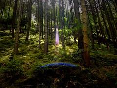 Beam me up, Scotty! (Caledoniafan (Astrid)) Tags: sun sunlight green nature sunshine germany landscape deutschland thringen nikon natur thuringia lensflare grn landschaft sonne vignette sonnenschein sonnenlicht thringerwald nadelwald thuringianforest caledoniafan nikoncoolpixl820
