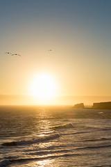 _T8A0703.jpg (Jesse Bentz) Tags: california birds landscape sunset highway1 pacificocean