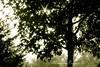 Magic Tree (AlexBlues) Tags: backlight mystic tree fujifilmxe1 zeiss135