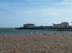 DSCF6488 (baskill) Tags: worthing pier sussex gulls seagulls