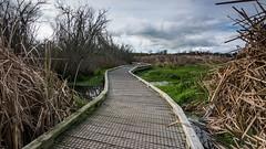 Crooked Path (Myreality2) Tags: bushwalk hamilton newzealand waikato outdoor lakengaroto teawamutu nz tokina af 1116mm f28