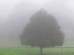 Fog in the morning at Beech Grove Park. (kennethkonica) Tags: nature outdoor canonpowershot canon global random hoosier marioncounty midwest usa america american beechgrovepark indiana indianapolis indy fence fog trees weather foggy summer august