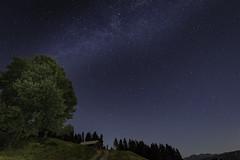 Night (Stefsan (on and off)) Tags: milkyway stars perseids meteors nightsky night tree astronomy landscape nature falera graubnden grisons schweiz suisse svizzera switzerland canon eos 7d stefsan stefansandmeier