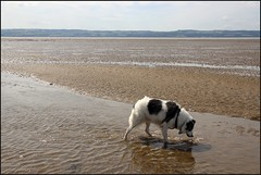 West Kirby Wirral  230816 (6) (over 4 million views thank you) Tags: westkirby wirral lizcallan lizcallanphotography sea seaside beach sand sandy boats water islands people ben bordercollie dog beaches reflections canoes rocks causeway yachts outside landscape seascape