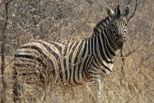 Namibia Dangerous Game Safari - Caprivi Strip 83