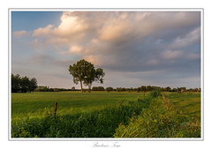 two tree. (Tom Baetens) Tags: 1835mm tombaetens belgium clouds d610 evening landscape light nikon outdoor sky sunlight sunset tree view