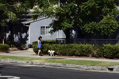 (Casey Lombardo) Tags: streetphotography losangeles losangelesca la dog dogs dogwalker break breaktime