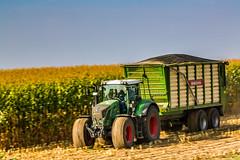 926 Vario (Fotos aus OWL) Tags: biogas ernte silage abfahrer fendt traktor mais