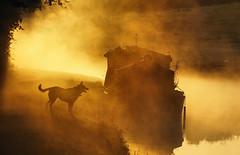 watching horses (Tim Gardner pics) Tags: